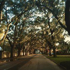 """Trees Form a Canopy Just Outside The Fountain of Youth, St. Augustine, Florida  #awesome #ykyafw #nature #staugustine #fountainofyouth"""