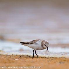 Strand, Birds, Animals, Animales, Animaux, Bird, Animal, Animais