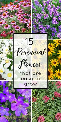 15 of the best perennial flowers! Easy to care for perennial flowers for your garden! #perennial #perennialflowers #flowers #gardening #organicgardening #deerresistantplants #droughttolerantplants