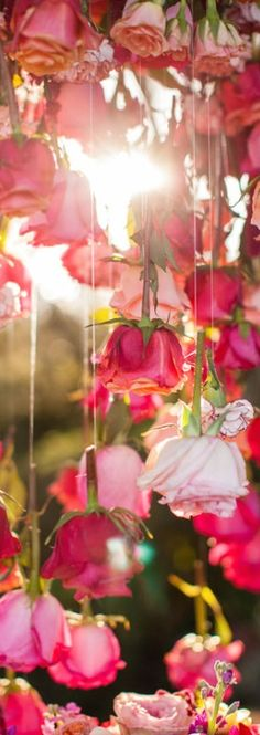 Foto (College Glamster) A unique way to create a backdrop for your ceremony, behind couples table or as a displayed area around or above cake anywhere. Using clear fishing line attaching Single floral stems/ here rose stem. Flower Power, My Flower, Flower Plants, Pretty In Pink, Beautiful Flowers, Rose Bonbon, Garden Types, Rose Cottage, Flower Arrangements