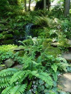 Woodland Garden - eclectic - landscape - charlotte - by Jay Sifford Garden Design Fern surrounding pond Ferns Garden, Moss Garden, Water Garden, Shade Garden, Garden Pond, Rockery Garden, Balcony Garden, Garden Paths, Back Gardens