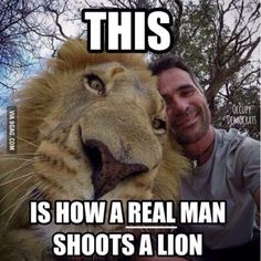 "Hunting a lion is the most cowardly thing you could do!! Right on! ""To show you how incredibly difficult it is to hunt a lion, here's a selfie Matt took next to one. Then he tried to run.... just kidding he fell asleep."" I stand against hunters. #againsthunting"
