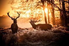 deer  1080p windows 1920x1280