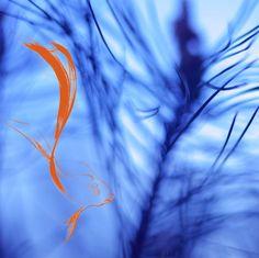 fish  statement: 직접 찍은 소나무 사진 위에 헤엄치는 물고기를 합성했다.