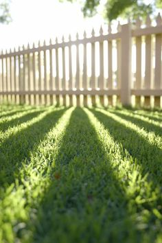 Control broadleaf weeds in lawns with appropriate post-emergent herbicide