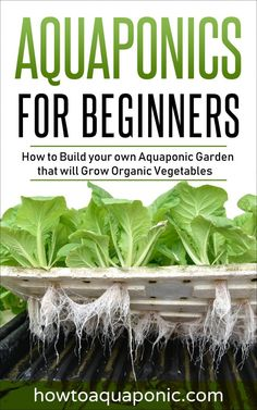 Aquaponics DIY Herbs - Root Details For Easy Aquaponics System Around The Uk - Bored Munkey Aquaponics System, Hydroponic Farming, Aquaponics Greenhouse, Hydroponic Growing, Aquaponics Fish, Indoor Aquaponics, Hydroponic Grow Systems, Grow Organic, Organic Vegetables