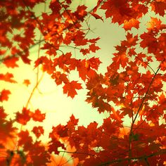 I love the color of leaves in the fall. And also the noise of when you step on them :P
