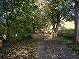 Tree lined avenue on the way into Preston on the Preston Guild Wheel