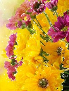 Cellphone Wallpaper, I Wallpaper, Beautiful Gif, Beautiful Roses, Flowers Gif, Gifs, Blooming Flowers, My Flower, Bouquet
