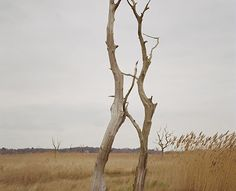 Trees, Suffolk   Eva Vermandel