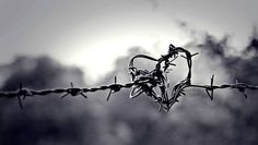 What more do you want, the heart is a barbed wire knot, it serves its purpose, till it stops, what more do you want. Cover Pics For Facebook, Fb Cover Photos, Cover Photo Quotes, Cover Quotes, Heart Pictures, Cool Pictures, Beautiful Pictures, Beautiful Scenery, Simply Beautiful