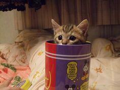 【隠れてるつもり】かくれんぼ中の猫を激写16選(画像) | CuRAZY
