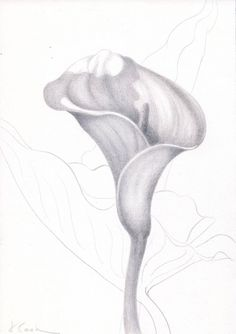 The delicacy and detail of plants make them wonderful subjects for silverpoint. Petunias, Fierce, Silverpoint, Calla Lily, Monochrome, Flora, Island, Cooking, Detail