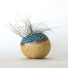 Air Plant Planter with Air Plant Natural Teal by ThriftedandMade, $16.00