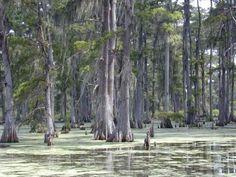 La Louisiane, dans le Sud des Etats-Unis, est célèbre pour ses bayous, ces anciens bras du fleuve Mississipi qui forment un réseau navigable de plusieurs milliers de kilomètres. Pour parcourir les marais plantés de cyprès chauves