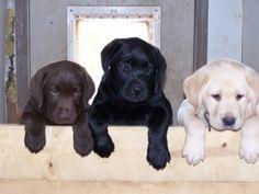 just like the 3 labs I've had...Tahoe, Rufus and Jake :)