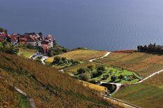 Rivaz, Lavaux - Switzerland [explored 15.01.2014] | Flickr - Photo Sharing!