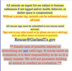 Hugo Espinoza Shelter Supervisor Garland Animal Services Rescue