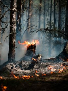 This is another aftermath of forest fire. We cause damage on trees, which could hurt us in the long run. It can hurt the lumber industry, which can cause its business to go down.