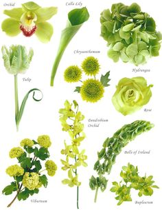 "Wedding Flower Arrangements Spring green - Have you ever found a picture of a bouquet and wondered, ""What is that flower?"" Here is a collection of flower names sorted by color. A few bouquet examples are at the bottom and so… Types Of Flowers, Green Flowers, Love Flowers, Colorful Flowers, Beautiful Flowers, Pictures Of Flowers, Green Hydrangea, Bouquet Flowers, Spring Flowers"