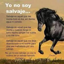 Resultado de imagen de fotos de caballos con frases de amor