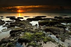 Bali by Hals
