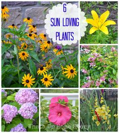 6 Low maintenance Sun loving plants for your summer garden www.whatsurhomestory.com