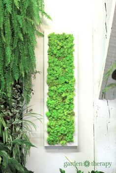 Use preserved reindeer moss in a long, white frame as wall art to add texture to a wall. Oh, and check out the tropical plant explosion beside it!