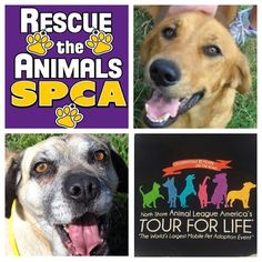 Puggles and Rosebud hope you visit the @rtaspca #TourForLife2015 adoption event in Abilene, TX, this weekend! This Texas-size pawty will be a terrific opportunity for you to meet your new best furry friend! Find us at PetSmart, 3501 Catclaw Dr, from 10am-5pm tomorrow and 12pm-5pm on Sunday. #BetterWithPets #adoptdontshop #rescue #rescuetheanimals #dogs #cats #puppies #kittens #texas #abilene #lonestar #Purina #chateaulapaws #adopt #seniorspotlight #shelterpets #spca