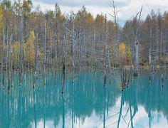 Blue pond. Looking for more information aboout Hokkaido? Go Visit Eastern Hokkaido. http://ja.visit-eastern-hokkaido.jp/