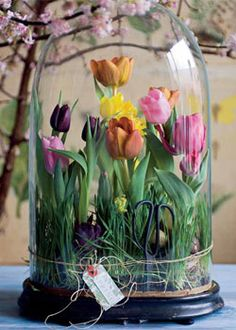 Oh, let the spring in coming for a long time. In my house I try spring fixed to enforce vases with tulips and hyacinths jars, but how cute is this spring garden under a glass bell!  Translated from Dutch