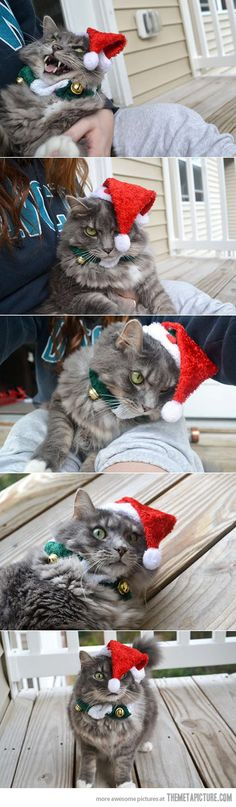 Pin By Jeannette Ter Haar On Animals And Christmas Etcetera - Sneaky cat got caught