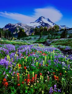 One of my favorite mountains and one of my favorite places in the world.  Oregon's Mt. Jefferson Wilderness area.