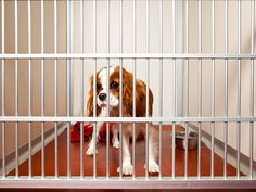 5 Common Myths About Adopting From a Shelter