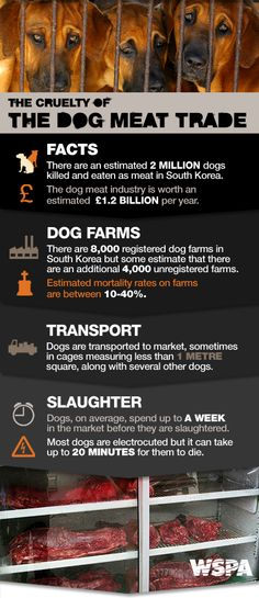 #dogmeat #dogcruelty #wspaappeal http://www.wspa.org.uk/helping/appeals/dog_meat_appeal_collection.aspx