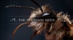 90% of Britain's bees are Solitary Bees. They are crucial pollinators, yet are little known or conserved. This film aims to change that. This film showcases…