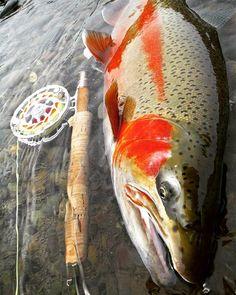 #hatchoutdoors #hatchreels  #finatic #sageflyfish  #sageflyrods  #simmsfishing #flyfishing #flyfish #flyfishingjunkie #flyfishingaddict #flyfishingnation #flyfishingphotography #patagoniaflyfishing #findyourwater #repyourwater #troutbum #flylords #troutporn #sightfishing #catchandrelease #keepemwet #backcountry #outdoorlife #woodsman #riverwalk #streamerjunkie #hokkaido #フライフィッシング #虹鱒