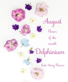 Flower of the Month – The Delphinium...A guest post by Katie Spicer, in collaboration with Kate Avery | Flowerona
