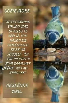 Lekker Dag, Afrikaanse Quotes, Goeie Nag, Goeie More, Morning Greeting, Special Quotes, Good Morning Wishes, Prayer Quotes, Morning Quotes
