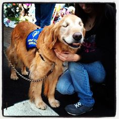 Dylan Stableford @stableford  A blind therapy dog visits the memorial for #Newtown victims, 4:35 p.m. @ Sandy Hook, CT http://instagr.am/p/TZVH_znzyW/