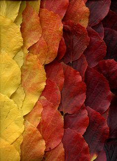Autumn Leaves in Burgundy Red and Mustard Yellow Land Art, Patterns In Nature, Textures Patterns, Autumn Photography, Art Photography, Natural Forms, Geometric Art, Autumn Leaves, Color Inspiration