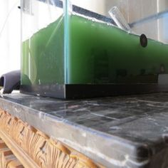 Food of the Future: Window DIY Spirulina Superfood easy steps