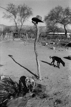 Abbas MEXICO. State of Guerrero. Village of San Augustin de Oapan. A bull's head after slaughter, a hungry dog, a hat on a pole. 1983.