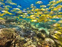 Bariera de corali din Noua Caledonie e a doua din lume - WLJ