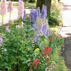 Look for Soft, Romantic Plants:   Most cottage gardens have a romantic feel. Part of that feel comes from the flowers. Look for blooms in soft pastel shades. Also look for plants packed with petals, such as peonies and old roses. As an added bonus, many of these varieties are also wonderfully fragrant.
