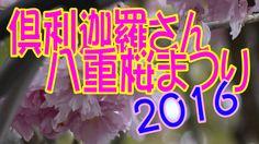 【散策物語】 倶利迦羅さん八重桜まつり 2016 「富山県小矢部市」