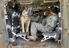 If a dog is too gentle, they aren't allowed to go on patrol. Rex L274 failed out of aggression training courses due to his friendly disposition, but was a talented scout, bomb-sniffer, and morale booster for troops.