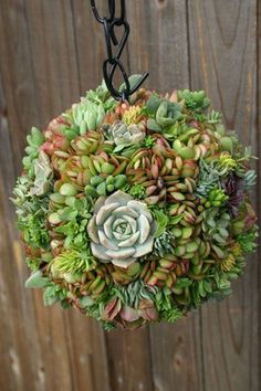 Succulents Idea Box by Pamela succulent orb experiment, container gardening, flowers, gardening, suc Hanging Succulents, Growing Succulents, Succulents In Containers, Cacti And Succulents, Container Flowers, Container Plants, Succulent Landscaping, Succulent Gardening, Container Gardening