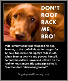 "Mitt Romney admits he took 12-hour trips with his dog, Seamus, strapped to the roof of his station wagon while his luggage rode inside. When Seamus got sick and pooped himself, Romney merely hosed him down and continued with him on the roof for hours more. Mitt is mean. GOOGLE: ""Romney's Cruel Canine Vacation"" for TIME Magazine article about it."