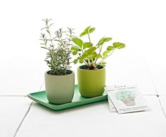 SOURCED. Herb Garden Set (w/out bottom plate) - 48.00- Heath Ceramics (non-returnable)